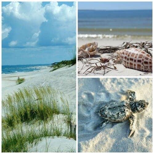 gulf county beach collage
