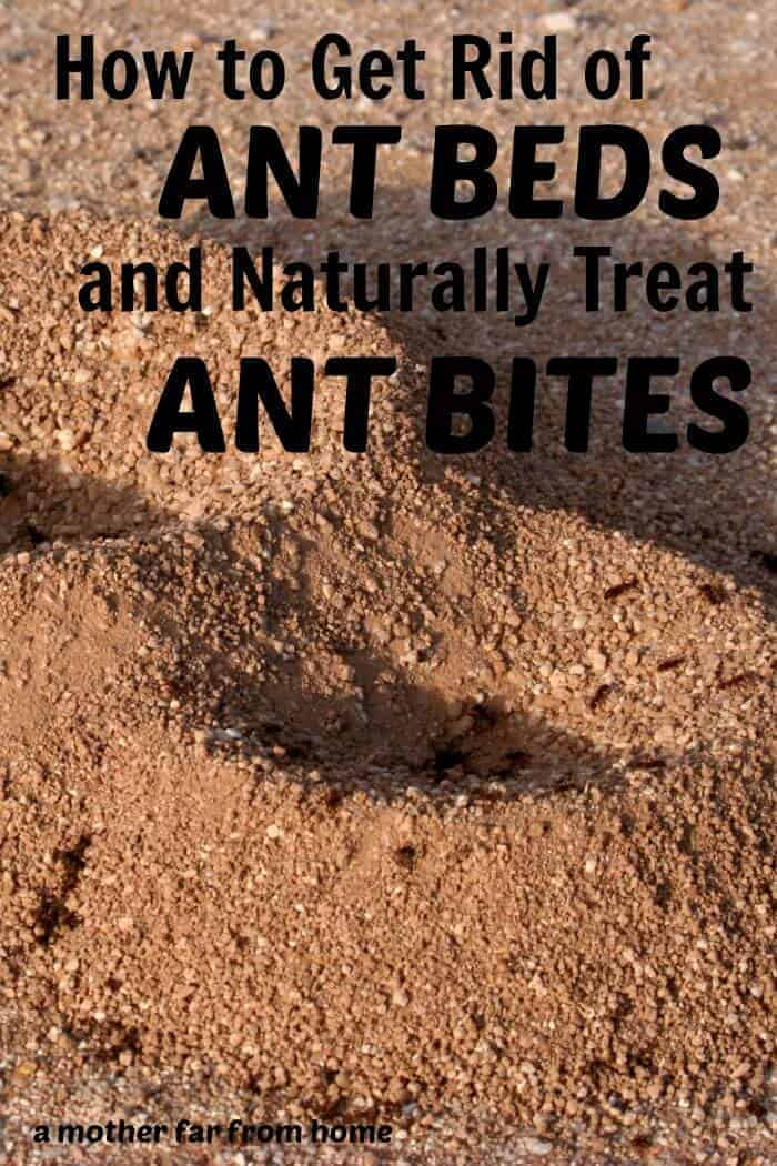 how to kill white ants at home naturally