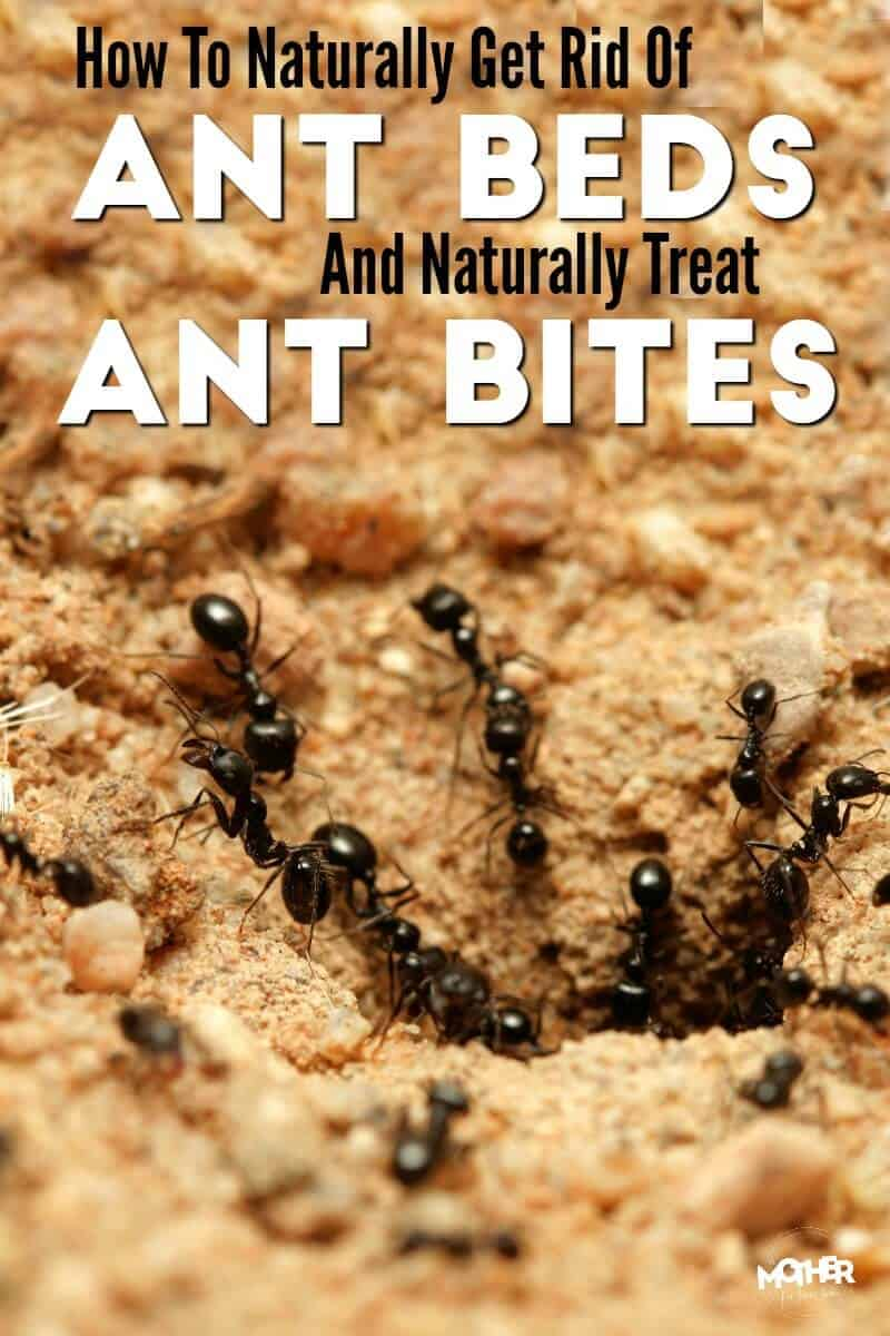 how to get rid of ant beds and treat ant bites naturally. Black Bedroom Furniture Sets. Home Design Ideas