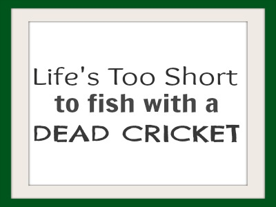 Life's too short to fish with a dead cricket
