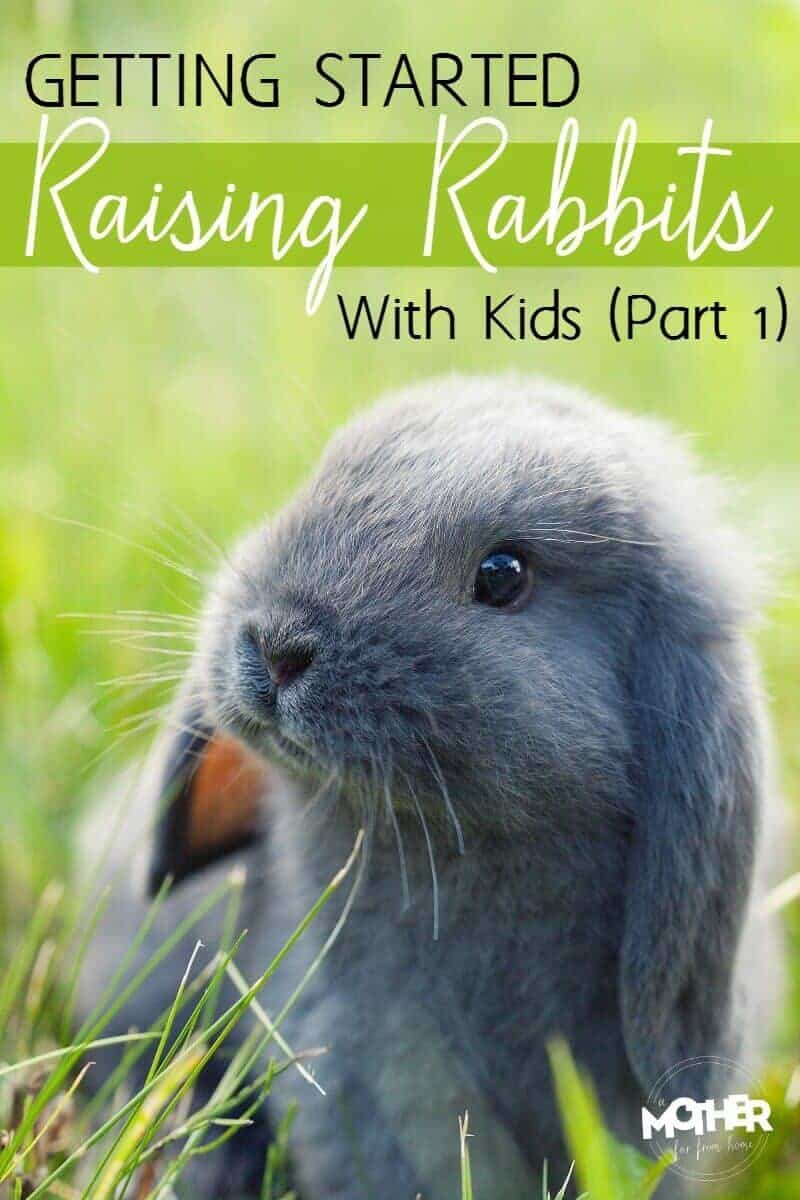 getting started raising rabbits with kids