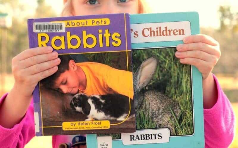 rabbit books