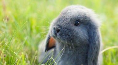 rabbits 101