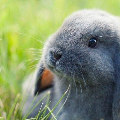 Getting Started Raising Rabbits with Kids (Part 1)