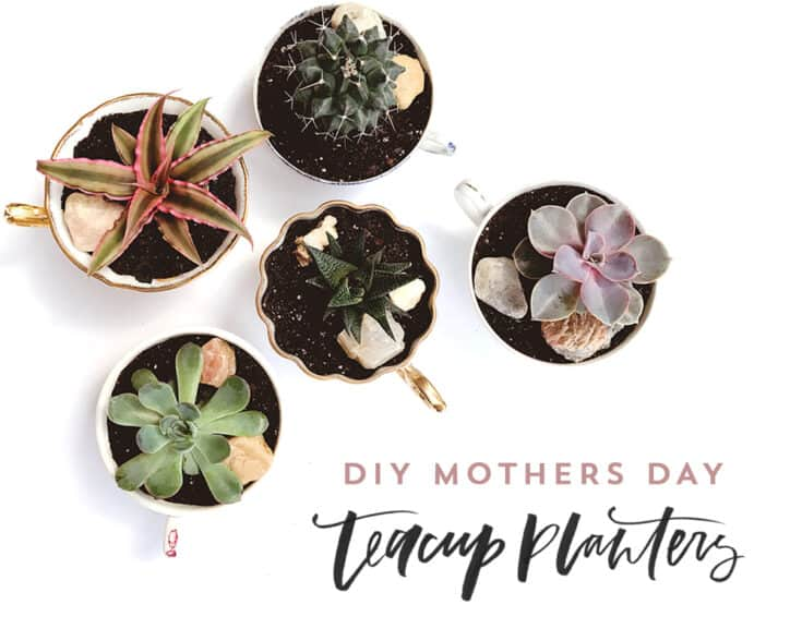 DIY Mother's Day Teacup Planters