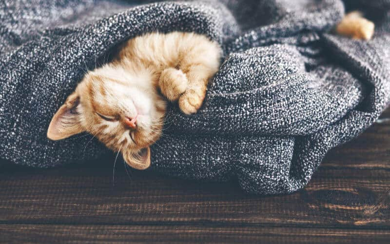 cozy blanket, cat sleeping, hygge family winter